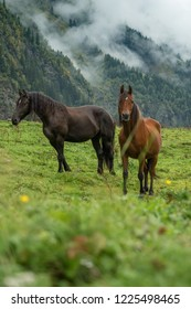 Two wild horses in mountains