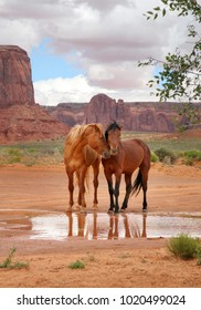 two wild horses at showing affection