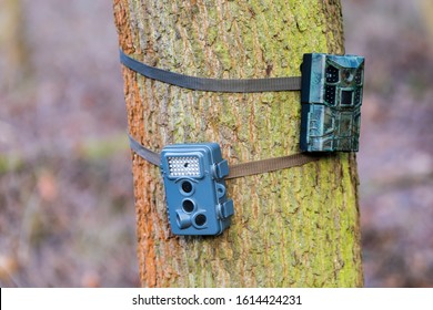 Two wildlife cameras on a tree