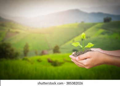 two woman's hand holding and caring a green plant over lighting and green background,planting tree,environment. ecology concept