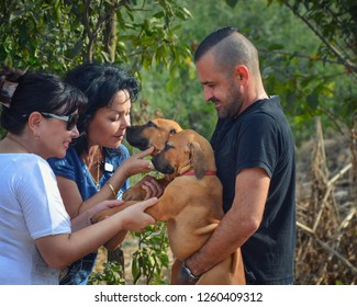 Two women come to visit the dog-breeding farm of South African Mastiff. The owner holds two 3 months boerboel puppies in hands. One woman greets one by her nose, another woman shakes leg of the puppy