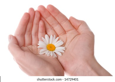 two women hands holding  one daisy flower with white background