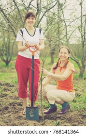 Two women making orchard with spade and sprouts  in spring