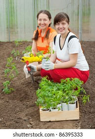 Two women planting tomato seedlings in greenhouse