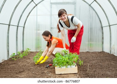 Two women planting tomato seedlings in hothouse