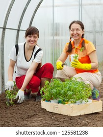 Two women planting tomato spouts in greenhouse