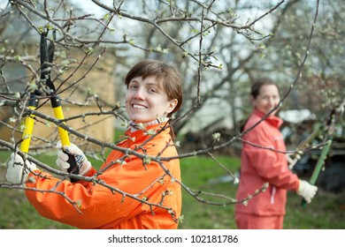 Two women pruning fruits tree in the orchard