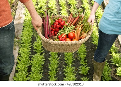 Two women and a vegetable basket in garden
