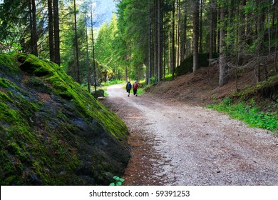 Two women walking tourist track in a mountain forest in Dolomites valley.