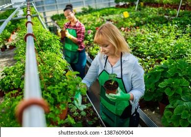 Two women working in a botanical garden