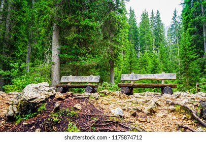 Two wooden benches in deep forest background. Forest benches view. Wooden benches in forest scene. Forest benches