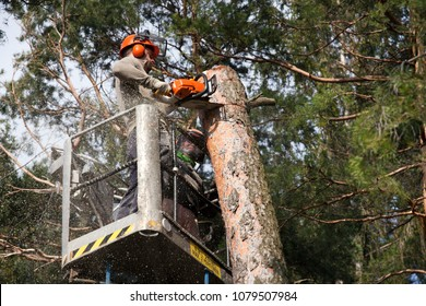 Tree Trimming Images, Stock Photos & Vectors | Shutterstock