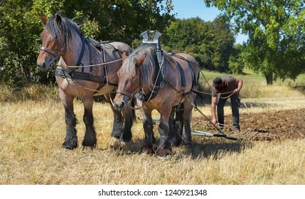 two workhorses at field work