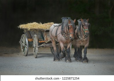 Two workhorses with wagon after harvest