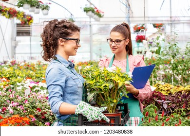 Two working girls in nursery garden holding plastic crate with flowers on hands