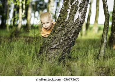 Two years old boy hidden behind a birch tree and and makes peek a boo
