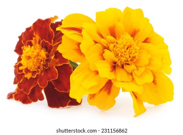 Two yellow flowers isolated on the white
