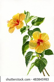 Two Yellow Hibiscus Flowers Vertical Design. Watercolor hand painted illustration of two tropical yellow flowers with leaves on a white background.