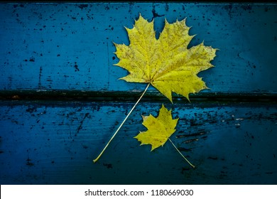 two yellow leaves lie on blue painting wooden bench. top view.