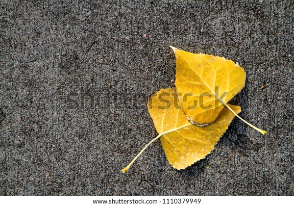 Two Yellow Leaves Together on Gray and Black Pavement