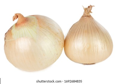 Two yellow onions for cooking on a white background