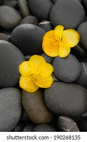Two yellow orchid and wet pebbles