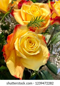 Two yellow rose buds