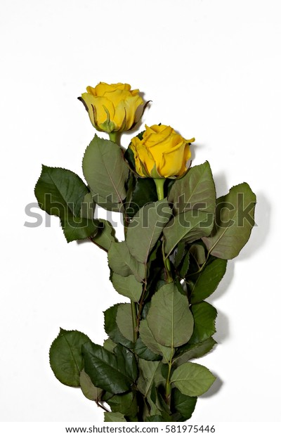 Two yellow roses on a white background.