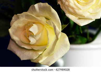 Two yellow roses in a white ewer.