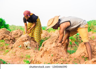two young african man and woman working on a farmland. African farmers working on a farmland