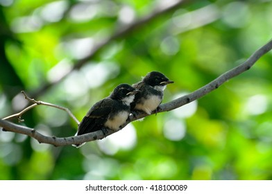 two young birds on a twig