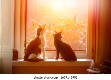 Two young cats sitting by a window protected by net to be safe