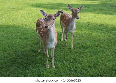 Two young deers, bambi, bambinos.
