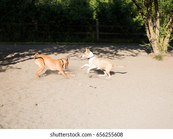 Two Young Dogs Playing outside at Dog Park