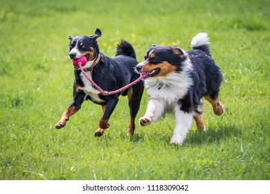 two young dogs playing together on the meadow