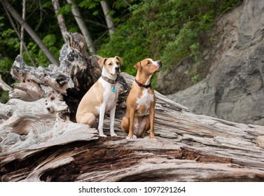 Two Young Dogs Sitting on Driftwood on Beach