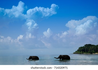 Two young elephants walking in the sea ,Thailand.