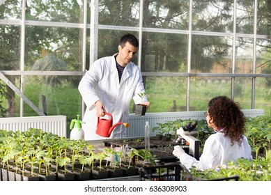 Two young engineers working in greenhouse with sprouts. Plant protection and care concept
