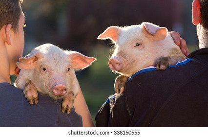 Two young farmers holding cute piglets on their shoulder