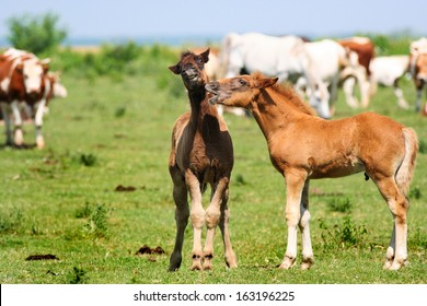 Two young foals playing on a green pasture surrounded but cows and other horses. They have funny facial expressions like they are talking and one is very surprised by what he has just heard :D