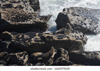 Two young and furry seals on rocks in New Zealand