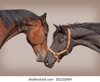 Two young horses touching noses in friendship