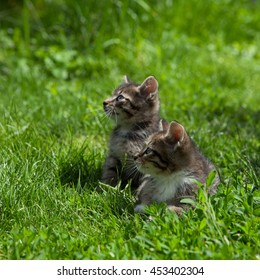 Two young  kittens outside in a sunny day relaxing in green grass and looking up together