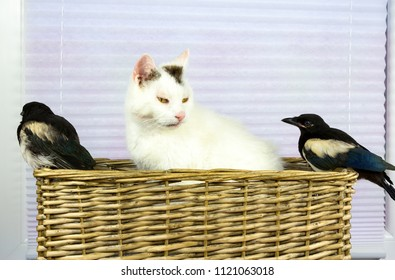 Two young Magpies discovered the cat basket and are sitting together with the old tomcat.
