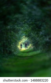 Two young men running on sunny forest path during summer.