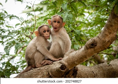 Two young monkeys sitting on a tree branch.