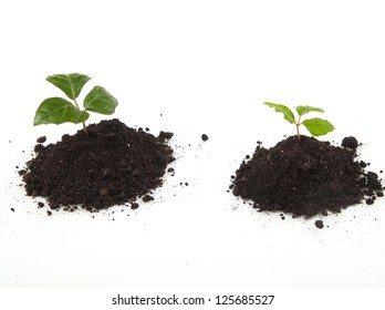 Two young plants in soil growing up on white background