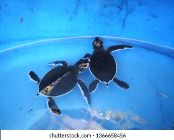 two young turtle hatchlings
