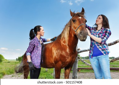 Two young women brushing bay horse at the farm