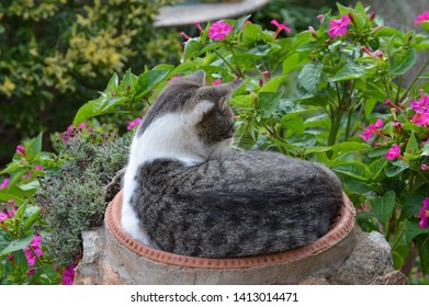 Two-colored street cat resting outside